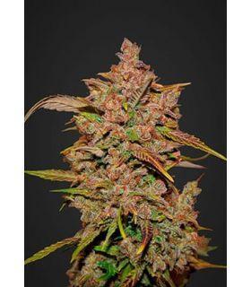 Σπόροι κάνναβης - Crystal Meth (FastBuds)