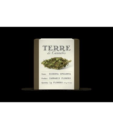Terre di Cannabis - Riserva Opulenta