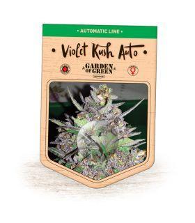 Σπόροι κάνναβης - Violet Kush Auto (Garden of Green)