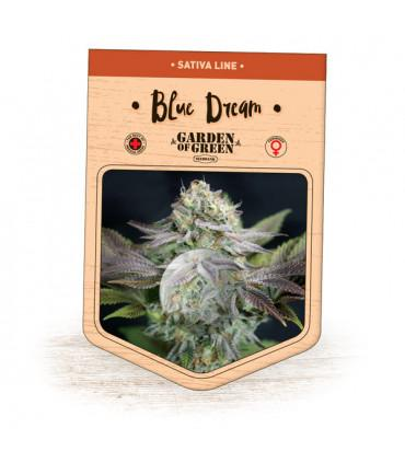Blue Dream (Garden of Green)