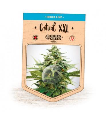 Critical XXL (Garden of Green)