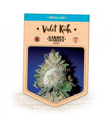 Violet Kush (Garden of Green)