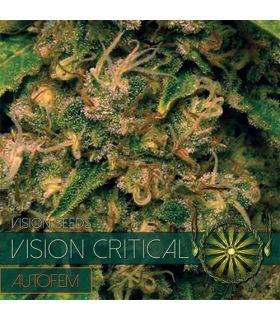 Σπόροι κάνναβης - Vision Critical AutoFem (Vision Seeds)