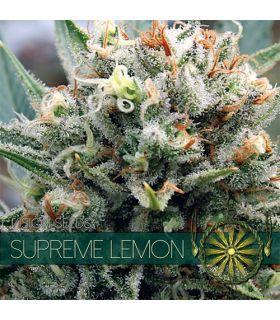Σπόροι κάνναβης - Supreme Lemon (Vision Seeds)
