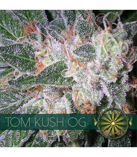 Σπόροι κάνναβης - Tom Kush OG (Vision Seeds)