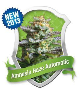 Σπόροι κάνναβης - Amnesia Haze Automatic (Royal Queen Seeds)