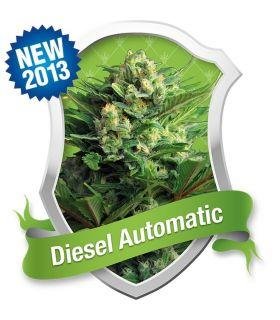Σπόροι κάνναβης - Diesel Automatic (Royal Queen Seeds)