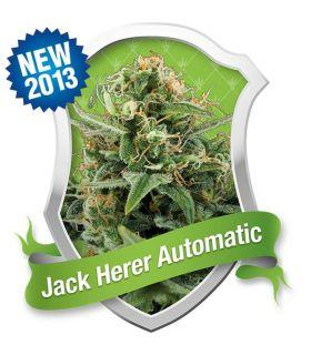 Σπόροι κάνναβης - Jack Herer - Royal Jack Automatic (Royal Queen Seeds)