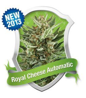 Σπόροι κάνναβης - Royal Cheese Automatic (Royal Queen Seeds)