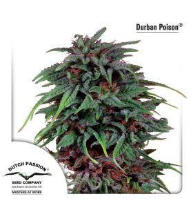 Σπόροι κάνναβης - Durban Poison