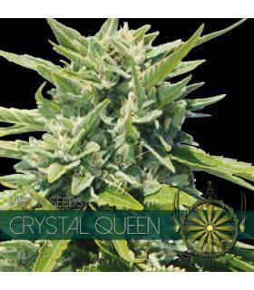 Σπόροι κάνναβης - Crystal Queen (Vision Seeds)
