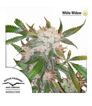 White Widow (Dutch Passion)