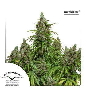 Σπόροι κάνναβης - AutoMazar - ποικιλία κάνναβης
