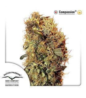Σπόροι κάνναβης - ComPassion