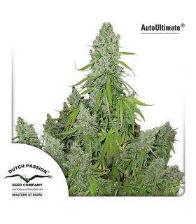 Σπόροι κάνναβης - AutoUltimate