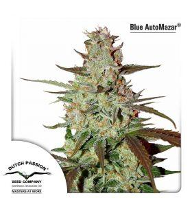 Σπόροι κάνναβης - Blue AutoMazar
