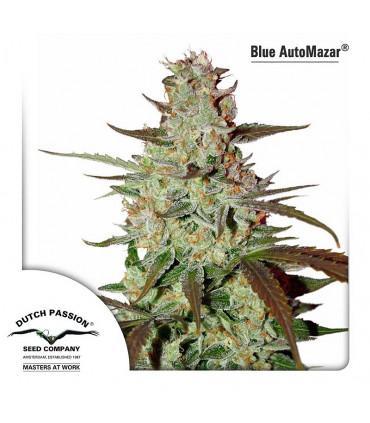 Blue AutoMazar