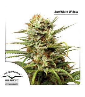 Σπόροι κάνναβης - AutoWhite Widow