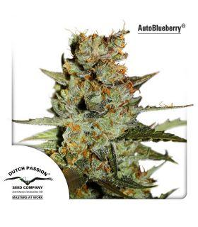 Σπόροι κάνναβης - AutoBlueberry
