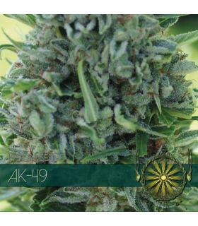 Σπόροι κάνναβης - AK-49 (Vision Seeds)