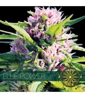 Σπόροι κάνναβης - Blue Power (Vision Seeds)