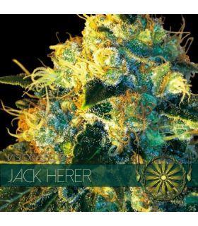 Σπόροι κάνναβης - Jack Herer (Vision Seeds)