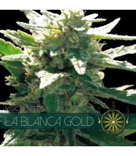 Σπόροι κάνναβης - La Blanca Gold (Vision Seeds)