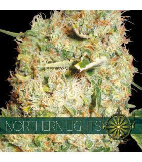 Σπόροι κάνναβης - Northern Lights (Vision Seeds)