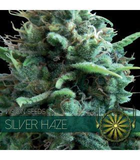 Σπόροι κάνναβης - Silver Haze (Vision Seeds)