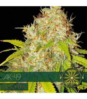 Σπόροι κάνναβης - AK-49 AutoFem (Vision Seeds)