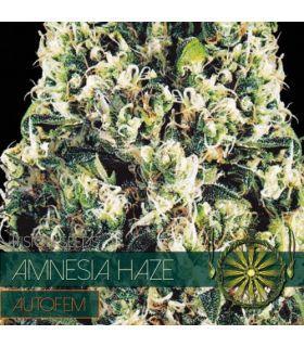 Σπόροι κάνναβης - Amnesia Haze AutoFem (Vision Seeds)