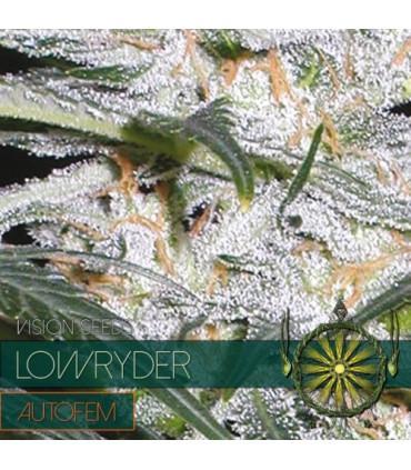 Lowryder AutoFem (Vision Seeds)