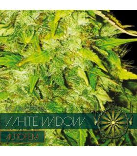 Σπόροι κάνναβης - White Widow AutoFem (Vision Seeds)
