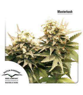 Σπόροι κάνναβης - Masterkush