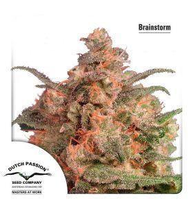 Σπόροι κάνναβης - Brainstorm