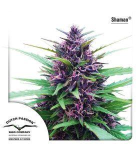 Σπόροι κάνναβης - Shaman