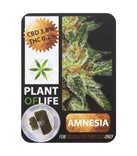 Σπόροι κάνναβης - CBD Hash 3,8% Amnesia