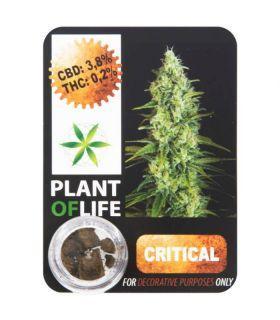 Σπόροι κάνναβης - CBD Hash 3,8% Critical