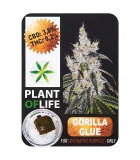 Σπόροι κάνναβης - CBD Hash 3,8% Gorilla Glue