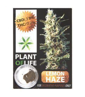 Σπόροι κάνναβης - CBD Hash 3,8%  Lemon Haze