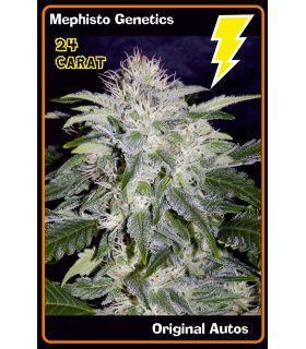 Σπόροι κάνναβης - 24 Carat (Mephisto Genetics)