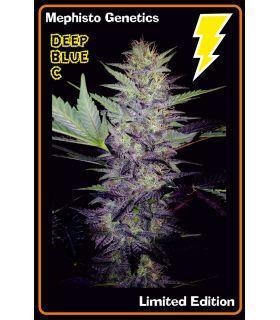 Σπόροι κάνναβης - Deep Blue C (Mephisto Genetics)