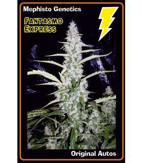 Σπόροι κάνναβης - Fantasmo Express (Mephisto Genetics)