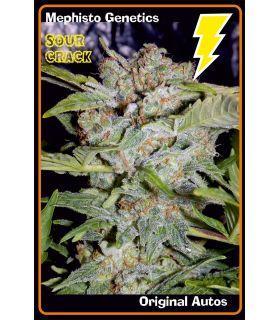 Σπόροι κάνναβης - Sour Crack (Mephisto Genetics)