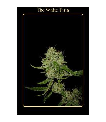 The White Train (Mephisto Genetics)