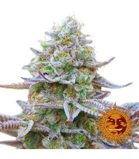 Σπόροι κάνναβης - Gorilla Skittlez