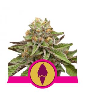 Σπόροι κάνναβης - Green Gelato (RQS)