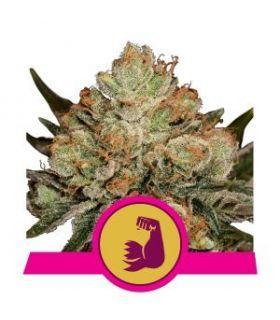Σπόροι κάνναβης - Hulkberry (RQS)
