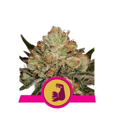 Hulkberry (RQS)